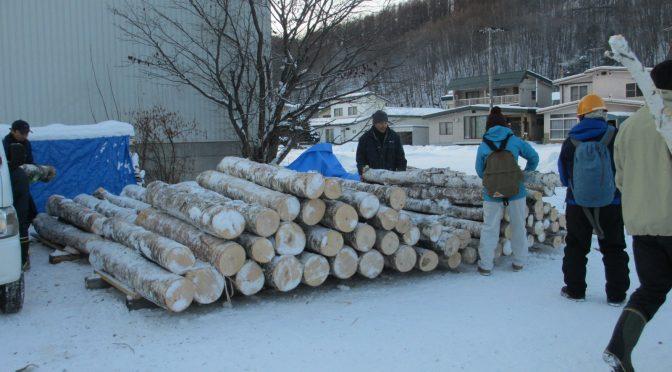白樺の伐採-2